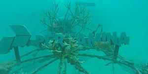 Pertamina Ikut Lestarikan Taman Bawah Laut Karimunjawa