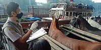 Kuda Pacu Kota Pahlawan Makin Laku di Pasaran