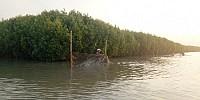 PHE Pulihkan Mangrove dan Terumbu Karang 3 Kabupaten Terdampak